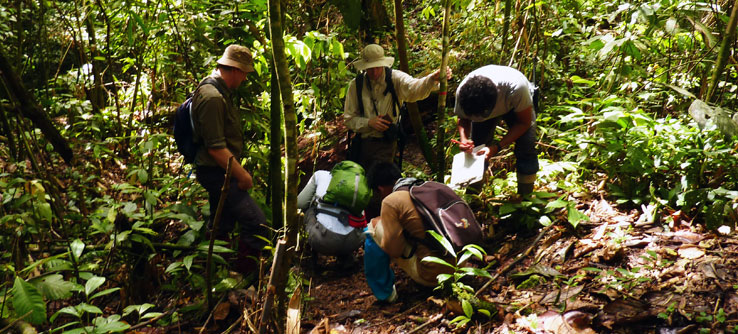 Volunteers collect vegetation data.